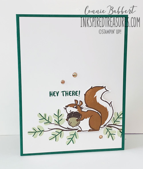 Hello #2 - Nuts About Squirrels